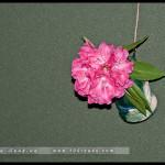 14_10_12_rbg_tea_ceremony_DSC8705