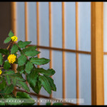 canberra_jp_embassy_23